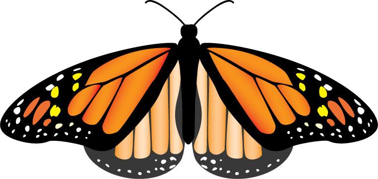 Butterfly July 5 2007
