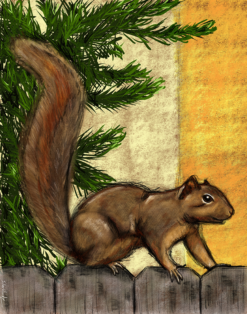 Squirrel September 27 2018