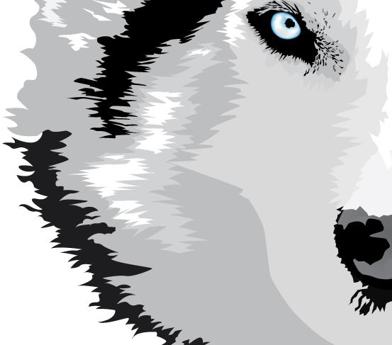 Wolf August 5 2013