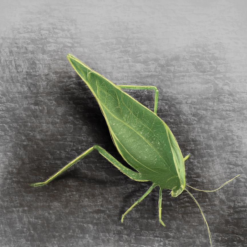 Bug_103119